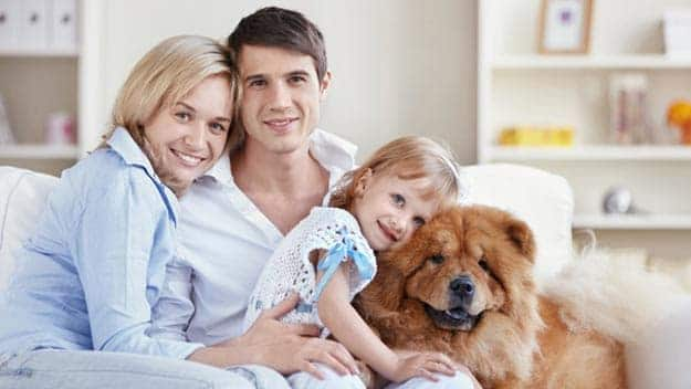 Wills & Trusts dog-young-family Direct Wills Cumbria